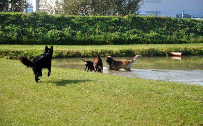 Änderung Spieltreff für Junghunde