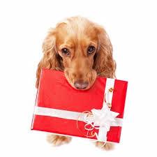 Aktion – Geschenkgutschein