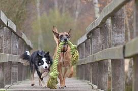 Wochenendseminar Mehrhundehaltung