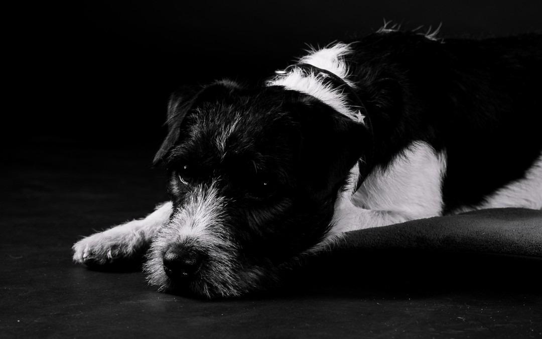 ERSTE-HILFE-Seminar für Hundehalter