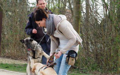 Hundebegegnungen meistern ab 18.03.2017