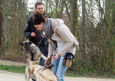 Hundebegegnungen meistern