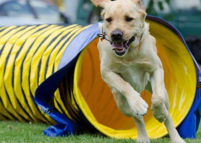 Slow-Agility für Junghunde