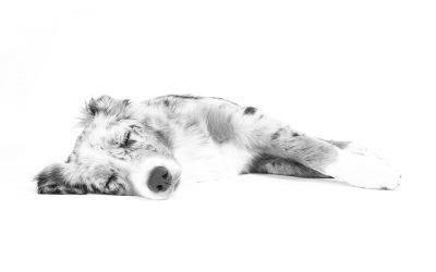 Massage am Hund (31.01.2017)