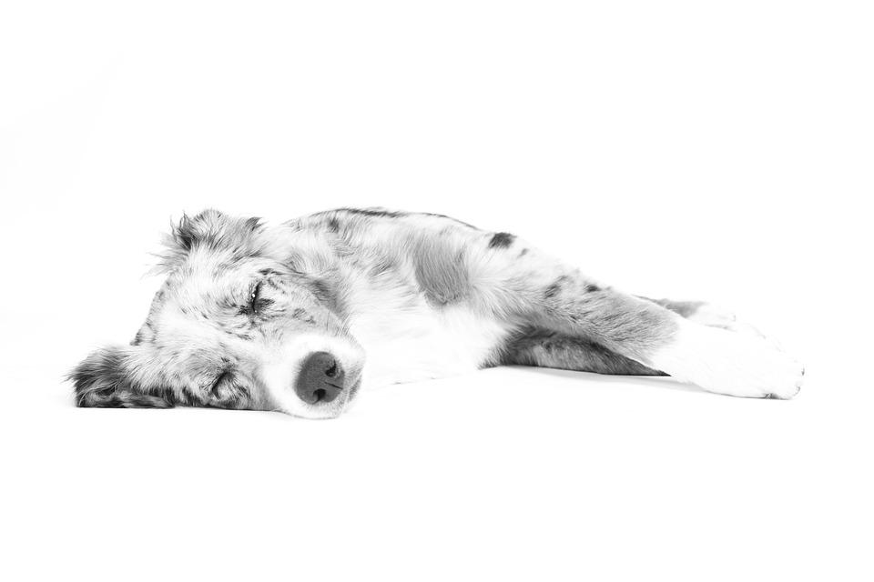 Massage am Hund