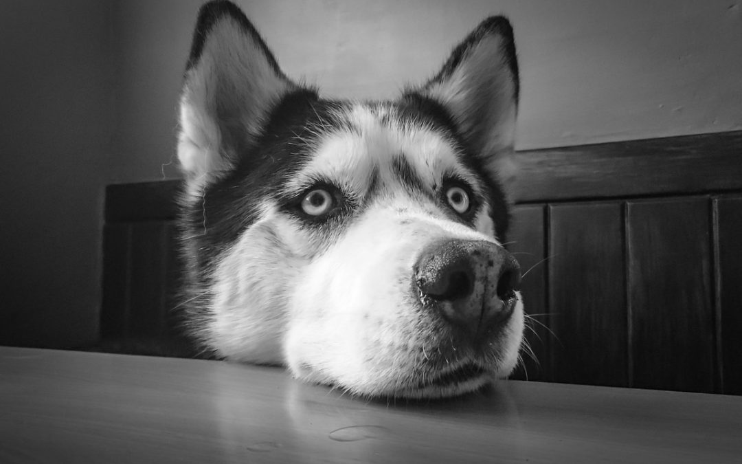 Was braucht der Hund zum glücklich sein? (14. März 2017)