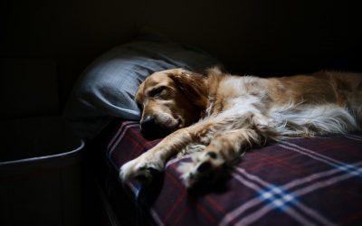 Wie viel Auslastung braucht mein Hund?