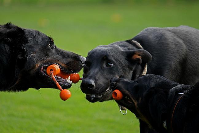 """Praxisseminar Team-Balance """"Richtig Spielen mit Hunden"""""""