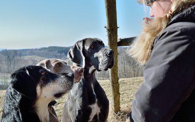 """""""Leben & Trainieren mit einer Hundegruppe"""""""