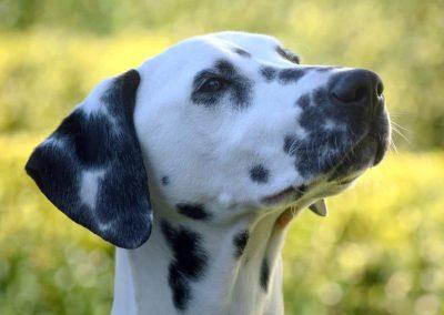 Tauber Hund – Na und?